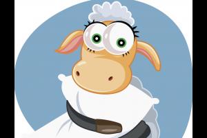 How wool bedding can help alleviate dust mite allergies