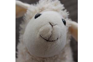 Seven Reasons for Choosing a Devon Duvets Wool Duvet