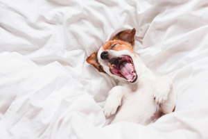 Why it is harder to get out of bed on winter mornings