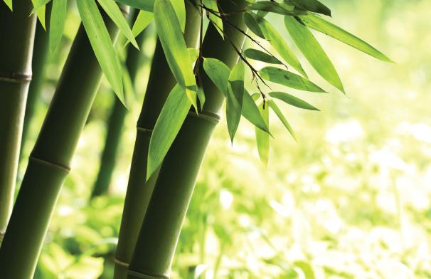 Devon Bamboo