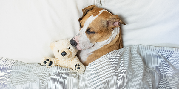Sleep Experience